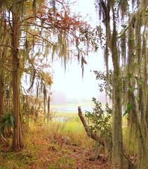 November 2011 (Loopodude) Tags: trees lake water fog foggy space spanishmoss organic growth life outdoors nature libertyboardwalk inverness florida canont2i canonefs1855mm