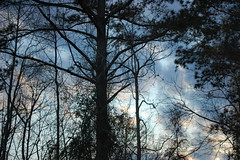 Trees And Sky. (dccradio) Tags: lumberton nc northcarolina robesoncounty outdoor outdoors outside nature natural sky tree trees woods wooded forest march monday spring springtime evening mondayevening goodevening nikon d40 dslr cloud clouds