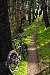078/365-2019 (zandern) Tags: 365the2019edition 3652019 day78365 19mar19critique whymtb mountainbike annadel singletrack bike