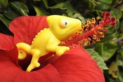 Dreamer (unicorn7unicorn) Tags: цветок гибискус юмор humor drollery macromondays aprilfools colorfulnature