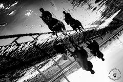 riflessi (PiePPo) Tags: riflessi blackandwhite bnw btwsociety bw bwcrew bwlover fineartphotobw igersbnw monochromatic monochrome nikon nikond7100 nikonitalia nikoneuropa nikonphoto nikonphotography