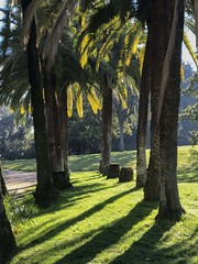 Luci e ombre (giorgiorodano46) Tags: gennaio2019 january 2019 giorgiorodano villatorlonia roma italy palme controluce backlight contrejour ombre shadow