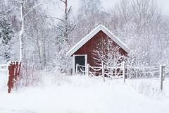 Freedom (Helena Johansson 71) Tags: fotosondag fs190203 frihet freedom winter winterlandscape snow nikond5500 d5500 nikon sweden