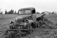 Dodge Truck (anthonypond) Tags: 50mm bw kodaktrix400 om2 olympusom2 oregon portland rodinal125 trix analog film
