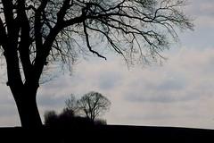 preetz_DSC04342 (ghoermann) Tags: deu geo:lat=5419678045 geo:lon=1026873105 geotagged germany kühren schleswigholstein landscape trees