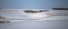 snow and fences and barn (Redheadwondering) Tags: sonyα7ii salisburyplain wiltshire winter snow snowday landscape trees fence fences barn copse minolta minolta100200mm