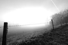 DSC01934 (MikeSolfrank) Tags: none herbst autumn nebel mist light lichtstimmung tree bäume berg bayern bavaria outside nature art sky winter