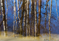 Reflet sur l'eau (sosivov) Tags: sweden winter spring reflection mirror water blue ice