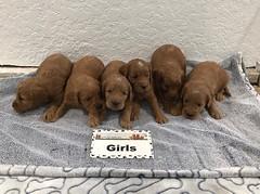 Baby Girls pic 2 3-9
