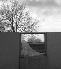 Broken window (Ingrid Friis Photo) Tags: window broken krossat glas träd bw silhouette tree svartvitt blackwhite