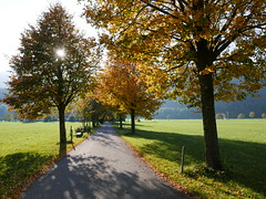 Herbst (Aah-Yeah) Tags: herbst autumn tree baum grassau achental chiemgau bayern sonne sun