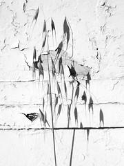 Oats & Peeling Walll B&W (zeevveez) Tags: זאבברקן zeevveez zeevbarkan canon shadow