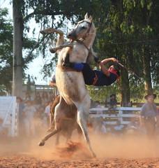 Marcio Oliveira e Carta Branca (Eduardo Amorim) Tags: gaúcho gaúchos gaucho gauchos cavalos caballos horses chevaux cavalli pferde caballo horse cheval cavallo pferd pampa campanha fronteira quaraí riograndedosul brésil brasil sudamérica südamerika suramérica américadosul southamerica amériquedusud americameridionale américadelsur americadelsud cavalo 馬 حصان 马 лошадь ঘোড়া 말 סוס ม้า häst hest hevonen άλογο brazil eduardoamorim gineteada jineteada
