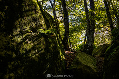Allá donde casi no llega la luz (SantiMB.Photos) Tags: 2blog 2tumblr 2ig bosque forest roquesencantades rocas rocks luz light garrotxa girona helecho fern otoño autumn geo:lat=4205288125 geo:lon=250416825 geotagged santfeliudepallerols cataluna españa esp
