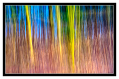 Pollok Park_ (ianmiddleton1) Tags: abstract icm woodland blur art texture