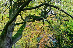 Autumn Tree (Bri_J) Tags: chatsworthhousegardens bakewell derbyshire uk chatsworthhouse gardens chatsworth nikon d7500 autumn tree branches