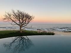 Reflections of Paradise (remiklitsch) Tags: lasventanasalparaiso 2019 springbreak paradise sunset mexico cabo remiklitsch leica evening ocean beach reflection pool tree