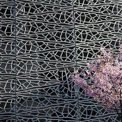 Floraison urbaine (Gerard Hermand) Tags: 1903297841 gerardhermand france paris canon eos5dmarkii architecture stade stadium jeanbouin arbre tree rose pink