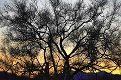 Tree at dusk (thomasgorman1) Tags: pattern branches tree paloverde desert sunset dusk sundown silhouette nikon bature baja mexico landscape