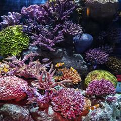 Beautiful aquarium at Siam Ocean world. (Andy @ Pang Ket Vui ( shootx2 )) Tags: siam bangkok thailand ocean aquarium nemo fujifilm x100f wclx100ii coral colorful reef