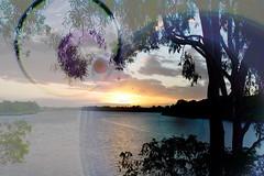 Lens flare (Dreaming of the Sea) Tags: sky sliderssunday tamronsp2470mmf28divcusd nikond7200 trees water gumtrees sunset clouds bundaberg burnettriver queensland australia dusk twilight hss gimp