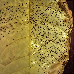 Weihnachtskaktusblatt mit Goldflittern (blasjaz) Tags: blasjaz weiser weihnachtstern christmasstar poinsettia glitter goldenglitter blatt botanik macromondays picktwo euphorbiapulcherissima euphorbiaceae plant