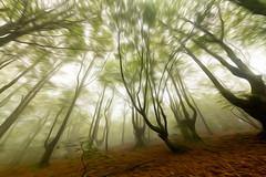 URKIOLA ART OLEO 10 (juan luis olaeta) Tags: paisajes landscape forest bosque basoa hayedo pagoa canoneos60d laiñoa nieblas fog foggy nature photoshop ligthroom urkiola