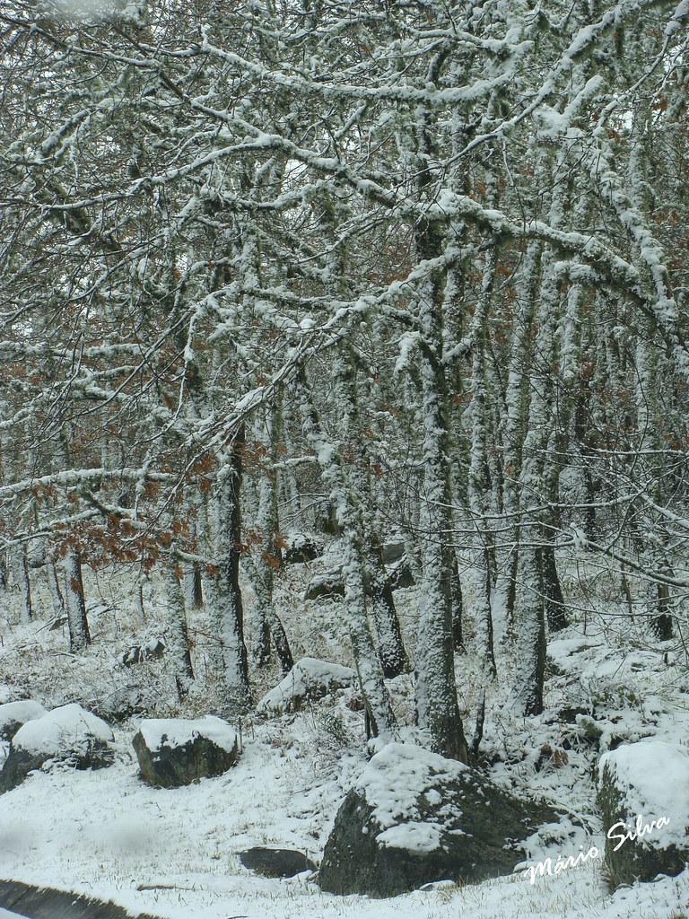 Águas Frias (Chaves) - ... em dia de nevada ...