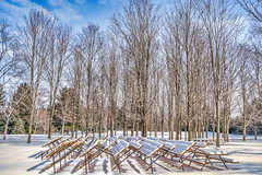 Picnic tables and birch waiting for Spring