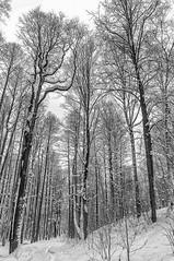 Snow Cathedral. | Снежный собор. (Vladimir Serebryanko) Tags: snow trees winter bw blackandwhite monochrome noiretblanc
