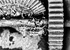 Crown Gear (MikeOB64) Tags: pentax me super rust decay gears film ilford fp4 grain