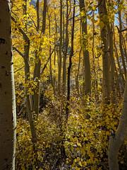 Autumn in Aspendell