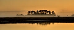 Marsh (somewheredowntheroadphoto) Tags: sunrise water reflection reflections shadows shadow light morning trees silhouette dark park fog foggy marsh swamp