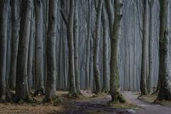Gespensterwald (Petra Runge) Tags: gespensterwald nienhagen wald bäume buchen nebel beeches fog misty trees woodland forest
