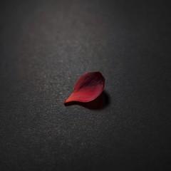 Unchain my heart #OneSinglePetal #minimalism (7 Blue Nights) Tags: onesinglepetal smileonsaturday minimalism red