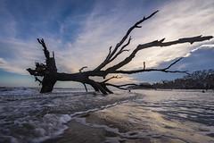 Time Topples Even the Mighty (JeffMoreau) Tags: botany bay plantation boneyard beach sony a7ii edisto island tree forest erosion landscape shore fallen south carolina