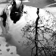 Into the mirror (pascalcolin1) Tags: paris homme man eau water reflets reflection arbre tree photoderue streetview urbanarte noiretblanc blackandwhite photopascalcolin 50mm canon50mm canon puddle flaquedeau