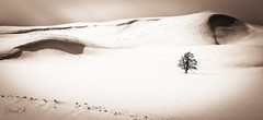 Lonely Shadow (Selectivebits) Tags: yellowstone snow tree winter nationalpark winterbeauty soupx20 freedomx16 admirationx22
