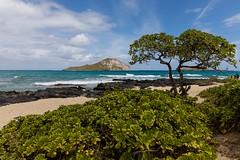 Kaupo Bay (Karen_Chappell) Tags: travel hawaii nature scenery scenic landscape sea seascape pacific ocean tree green blue island oahu usa canonef24105mmf4lisusm beach shore coast coastline clouds sky plants kaupobay