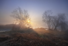 Break into of light (Maurizio Fecchio) Tags: morning sunrise alba foggy trees atmosphere blue landscape paesaggio water lights nikon d7100