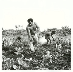 A Niue Islander and his children working in his bush garden, 1974
