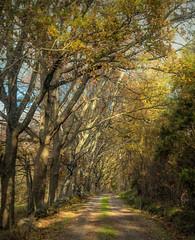 Autumn walk (tittiyttersj) Tags: storaaskerön autumn autumncolours autumnabience höstfärger höstkänsla bohuslän västkusten bästkusten sverige sweden