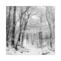 Touched By (gerainte1) Tags: winter snow blackandwhite woodland yorkshiredales film portra400 hasselblad501