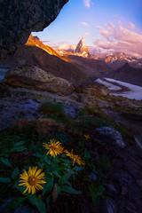 Matterhorn Morning (AirHaake) Tags: mountain mountains matterhorn alps swissalps switzerland flowers morning sunrise color clouds foreground depth atmosphere
