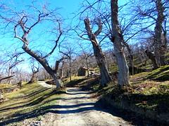 IMG_0047x (gzammarchi) Tags: italia paesaggio natura montagna firenzuolafi monti castagneto casa essicatoio albero strada sterrato