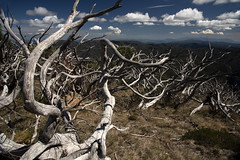 The Great Alpine Way March 2019 (i_shudder) Tags: greatalpineway alpine mountain australia victoria autumn composition mountains clouds altitude ghostgums