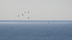 Чайки (unicorn7unicorn) Tags: море птицы чайки 365the2019edition 3652019 day84365 25mar19 colorfulnature