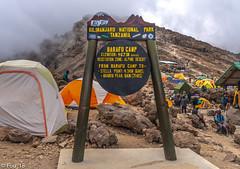 _FOU9673.jpg (Murray Foubister) Tags: africa gadventures spring treking tanazania flora travel 2018