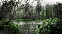 Green (geetarchick65) Tags: landscapes green water lake photography beginner scenery landscape trees new pictures outdoors greatoutdoors