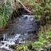 A WALK ALONG THE RIVER DODDER [ CLONSKEAGH TO MILLTOWN ]-146740